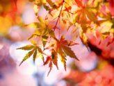 Jeseň na Zivke - pobytové balíky