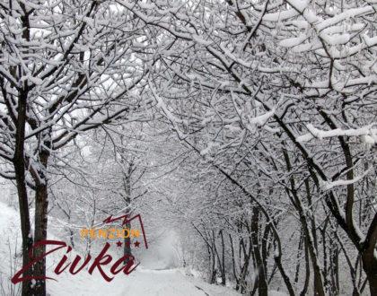 Zimná lyžovačka 2019